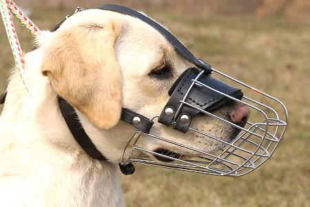 Wire dog muzzle