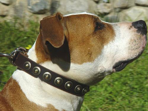 Gorgeous Leather Dog Collar - Fashion Exclusive Design_11 - Click Image to Close