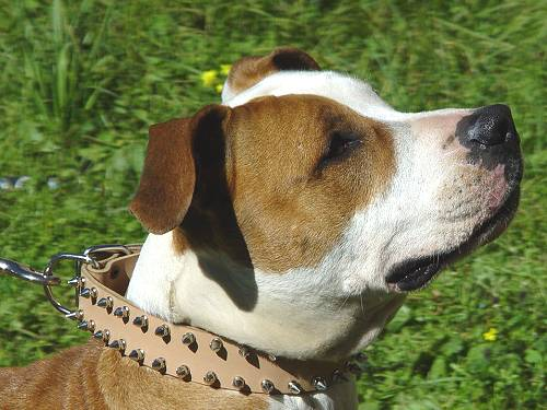 Tan Leather Spiked Dog Collar S33 - Click Image to Close