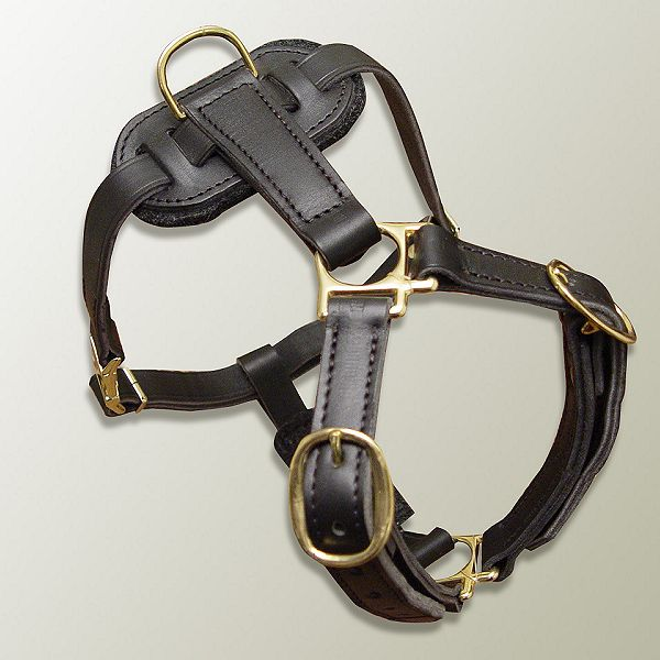 Leather Canine Harness for Tracking, Training and Walking [H7###1073