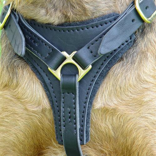 Tracking leather dog harness (View from the front)