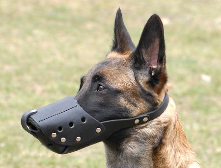 Free Breathing Leather Dog Muzzle for Everyday Activity - Click Image to Close