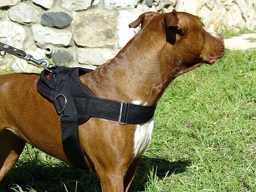 Dog Nylon Harness for Pulling, Tracking, Training and Daily Walking - Click Image to Close