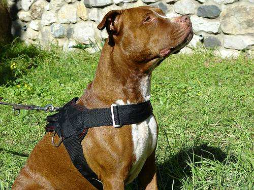 Nylon Multipurpose Pitbull Harness for Tracking / Pulling - Click Image to Close