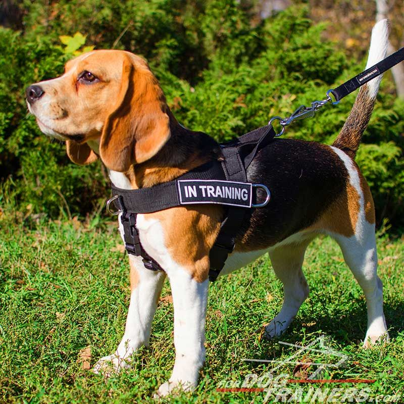 Nylon Beagle Harness for Pulling, Tracking, Training and SAR - Click Image to Close