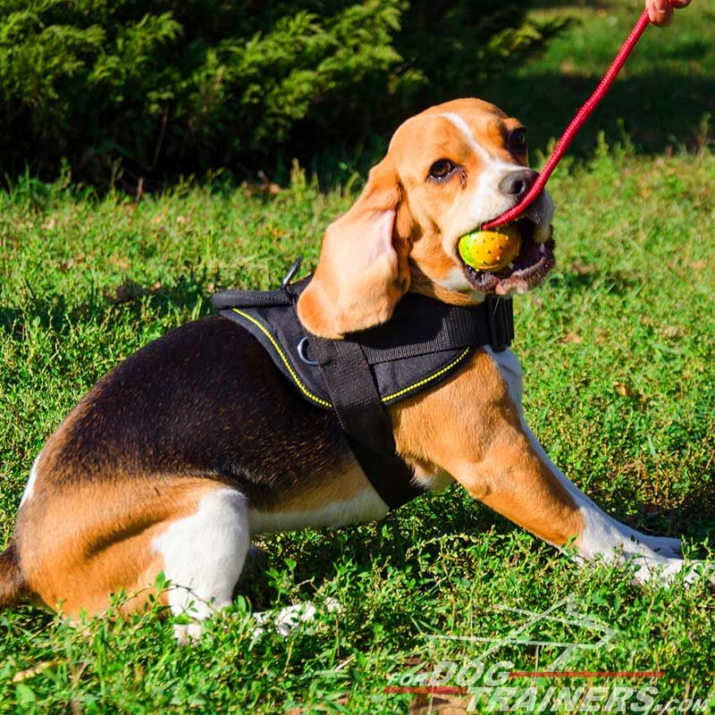 Adjule Nylon Beagle Harness