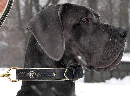 Royal Nappa Padded Handmade Leather Dog Collar - Click Image to Close