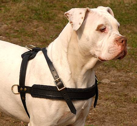 Tracking / Pulling / Agitation Leather Dog Harness For American Bulldog H5 - Click Image to Close
