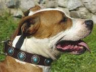 Gorgeous Wide Brown Leather Dog Collar - Fashion Exclusive Design