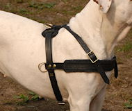 Argentine Dogo harness- Tracking/Pulling Leather Dog Harness