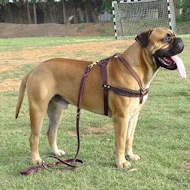 Tracking/Pulling Leather Dog Harness-Bullmastiff dog harness