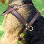 Tracking / Pulling / Agitation Leather Dog Harness For Airedale Terrier H5