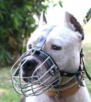 American Staffordshire Terrier  Wire Basket Dog Muzzles Size Chart -American Staffordshire Terrier  muzzle_1