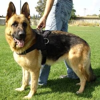 German Shepherd Nylon Dog Tracking Harness