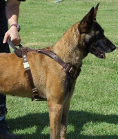 Agitation / Protection / Attack Leather Dog Harness with handle Perfect For Your Malinois H1