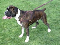 Tracking / Pulling / Agitation Leather Dog Harness For Boxer