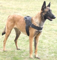 All Weather dog harness for tracking / pulling Designed to fit Malinois
