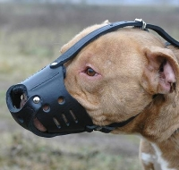 Padded  Leather Pitbull  Muzzle for Everyday Use