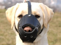 Everyday Labrador Leather dog muzzle - product code   M51