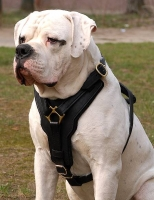 Exclusive Luxury Handcrafted Padded Leather Dog Harness Perfect  for your American Bulldog