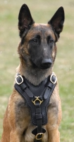 Exclusive Luxurious Handcrafted Padded Leather Dog Harness Perfect  for your Malinois H10