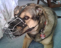 Gorgeous *Ginger wearing our Wire Basket Dog Muzzles Size Chart  - M4light