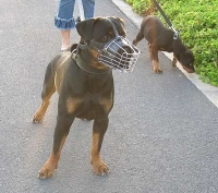 Basket Wire Dog Muzzle Light For Rottweiler - M4light_1