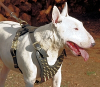 Spiked Walking dog harness made of leather And Created To Fit Bull Terrier and similar breeds - product code H9