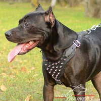 Spiked Dog Harness of Leather for Pitbull Walking