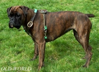 Tracking dog harness made of leather And Created To Fit Boxer H3_1