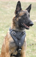 Agitation / Protection / Attack Leather Dog Harness Perfect For Your Malinois H1