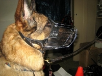 No Bite Dog Muzzle with Metal Cage for Easy Walking and Safe Training