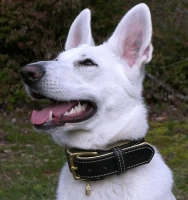 Royal Nappa Padded Hand Made Leather Dog Collar