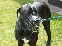 *Scooby wearing our exclusive Wire Basket Dog Muzzles Size Chart - Great Dane muzzle - M4light