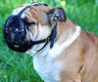 Everyday Light Weight Super Ventilation English Bulldog muzzle - product code   M41