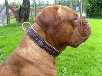 *Duncan wearing our exclusive Hand Made Leather Dog Collar - Fashion Exclusive Design - code  C43