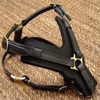 Exclusive Luxurious Handcrafted Padded Leather Dog Harness Perfect  for your Airedale Terrier H10