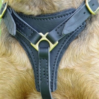 Tracking / Walking dog harness made of leather And Created To Fit Airedale Terrier H3