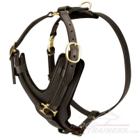 Handcrafted Padded Leather Dog Harness for Walking and Training