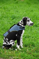 30% Discount - NEW 2018 All Season Extra Strong Nylon Vest Dog Harness- H13-Outdoor