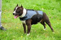30% Discount - NEW 2017 All Season Extra Strong Nylon Vest Dog Harness for Amstaff- H13-Outdoor