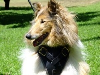 Padded Chest Support Leather Dog Harness Perfect For Your Collie H1