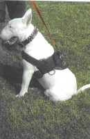 All Weather Dog Harness for Tracking and Training