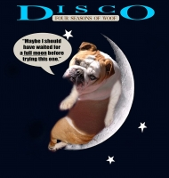 *Disco wearing our exclusive  Tracking / Pulling / Agitation Leather Dog Harness For English Bulldog H5