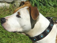 Gorgeous Wide Leather Dog Collar - Fashion Exclusive Design