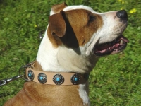 Gorgeous Wide Tan Leather Dog Collar - Fashion Exclusive Design,Special33