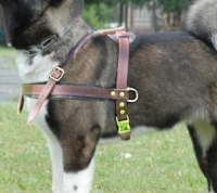 Alaskan Malamute Tracking /Pulling Leather Dog Harness