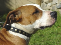 Gorgeous Leather Dog Collar - Fashion Exclusive Design_8