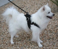 *All Weather Extra Strong Nylon Harness - H6 for American Eskimo Dog
