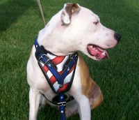 Handpainted Leather Dog Harness for Pitbull Agitation and Protection Training